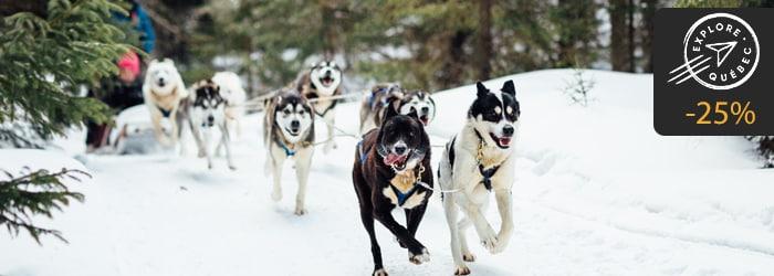 Forfait traineau à chiens explore quebec
